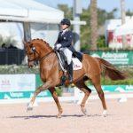 Club de Polo y Equitación San Cristóbal realizará concurso oficial de adiestramiento