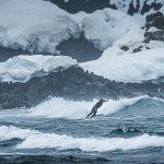 Ramón Navarro tuvo su aventura más extrema surfeando en la Antártica