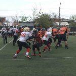 Felinos y Halcones debutaron con un triunfo en el Torneo Nacional Mayor de la LFA-Chile