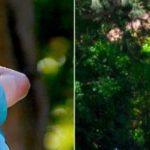 Los argentinos Juan Ignacio Noba y Valentina Rossi lideran el Abierto Sudamericano Amateur de Golf